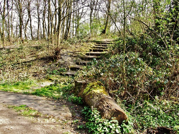 Steps - Moorcroft Wood