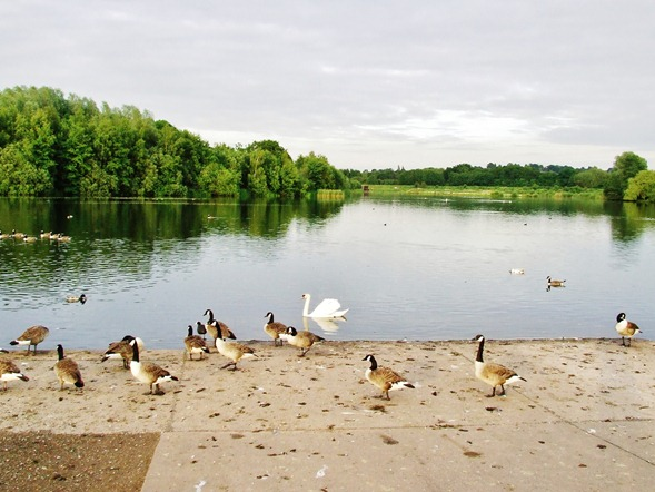 Forge Mill Lake