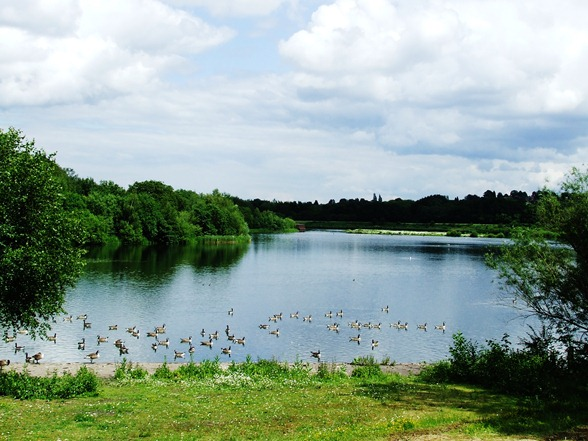 Sandwell Valley and Milky 017