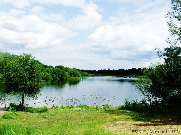 Sandwell Valley and Milky 016