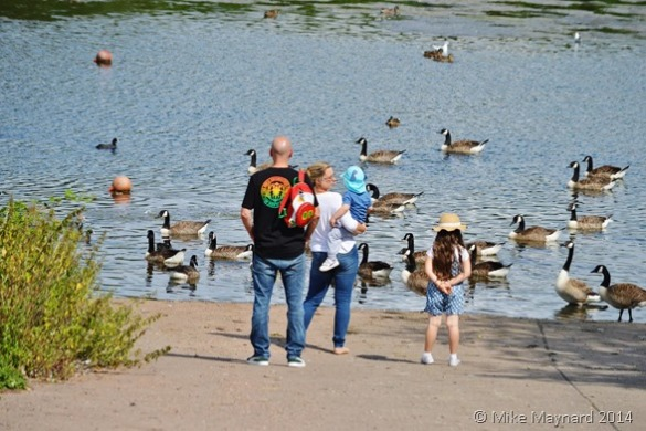Geese at Sandwell Valley