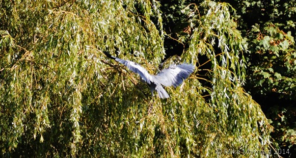 Bird landing in tree